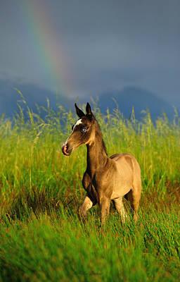 Konik Photograph - Rainbow by Artur Baboev