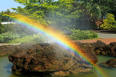 Photograph - Rainbow At Botanic Garden by John Burk