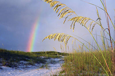 Photograph - Rainbow Beach Path 2 by Marie Hicks