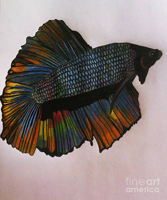 Rainbow Betta Art Print by LKB Art and Photography