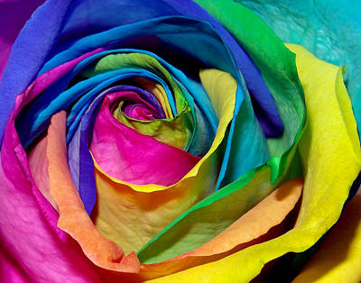Giuseppe Cristiano - Rainbow Blossom by Christina Young