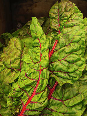 Photograph - Rainbow Chard by David Kay