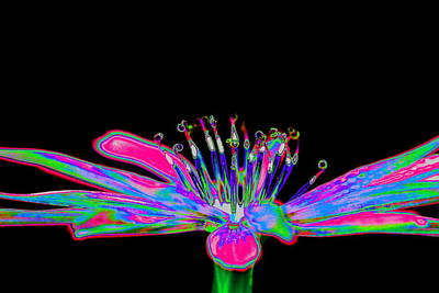 Manipulation Photograph - Rainbow Chicory by Richard Patmore