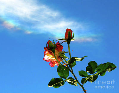 Rainbow Cloud And Sunlit Roses Art Print by CML Brown