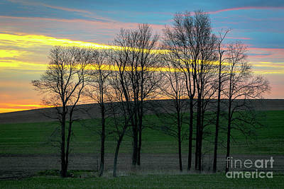 Rainbow Color Tree Horizon Art Print