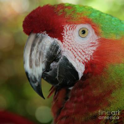 Rainbow Colourful Macaw Aloha Puohokamoa Original