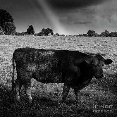 Rainbow Cow Art Print