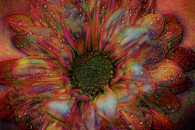 Photograph - Rainbow Daisy by Judy Vincent