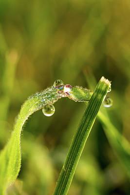 Keith Richards - Rainbow Droplets by Jennifer Wick