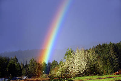 Photograph - Rainbow Entering Forest by Ben Upham III