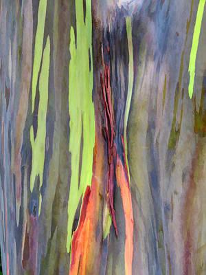 Rainbow Eucalyptus 13 Art Print by Dawn Eshelman