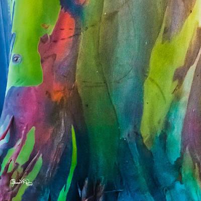 Photograph - Rainbow Eucalyptus 3 by Susan Molnar