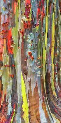 Photograph - Rainbow Eucalyptus Kauai Hawaii 7r2_dsc5054_01162018 by Greg Kluempers