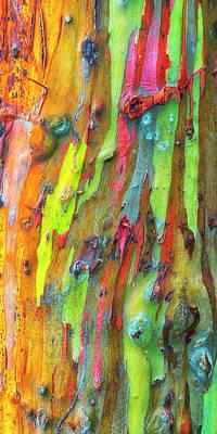 Photograph - Rainbow Eucalyptus Kauai Hawaii 7r2_dsc5061_01162018 by Greg Kluempers
