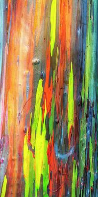 Photograph - Rainbow Eucalyptus Kauai Hawaii 7r2_dsc5062_01162018-1 by Greg Kluempers