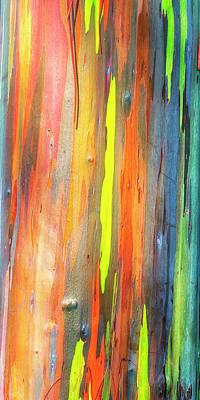 Photograph - Rainbow Eucalyptus Kauai Hawaii 7r2_dsc5062_01162018-2 by Greg Kluempers