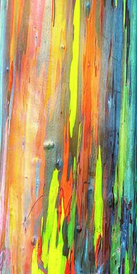Photograph - Rainbow Eucalyptus Kauai Hawaii 7r2_dsc5062_01162018 - 3 by Greg Kluempers