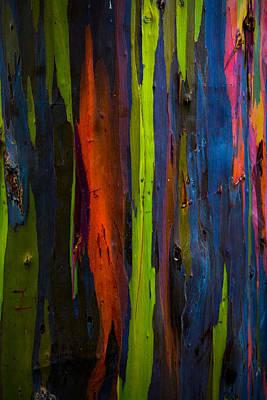 Photograph - Rainbow Eucalyptus  by Ryan Smith