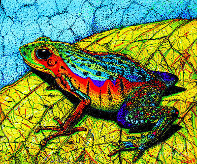 Animals Drawings - Rainbow Frog by Nick Gustafson