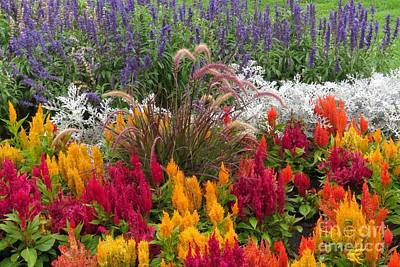 Photograph - Rainbow Garden by Frank Townsley