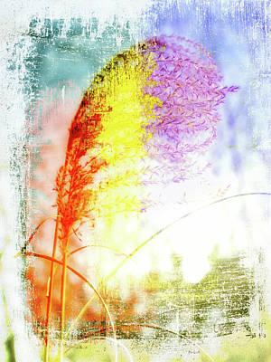 Photograph - Rainbow Grass by Bob Orsillo