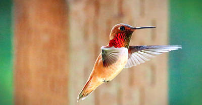 Photograph - Rainbow In Flight by Rory Sagner