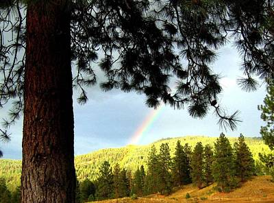 Photograph - Rainbow In Pine Country by Will Borden