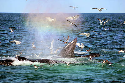 Photograph - Rainbow In The Spray 1 by Linda Sannuti