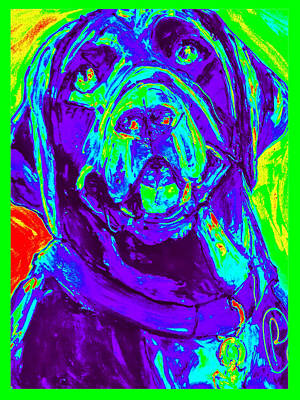 Retrievers Digital Art - Rainbow Jack Lab by Paula   Baker