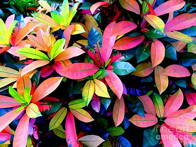 Photograph - Rainbow Leaves by Ed Weidman