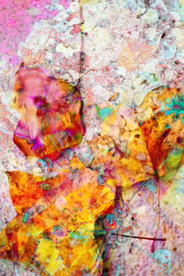 Photograph - Rainbow Abstract Leaves by Suzanne Powers