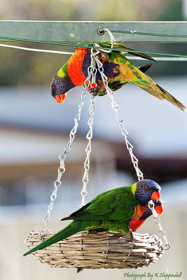 Digital Art - Rainbow Lorikeet 0661 by Kevin Chippindall