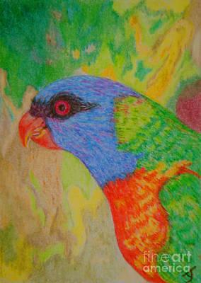 Drawing - Rainbow Lorikeet Aceo by Yvonne Johnstone