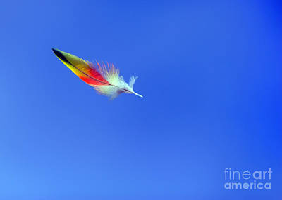 Rainbow Lorikeet Feather Art Print