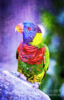 Photograph - Rainbow Lorikeet by Jim And Emily Bush