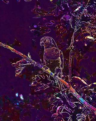 Digital Art - Rainbow Lorikeet Parrot Colourful  by PixBreak Art