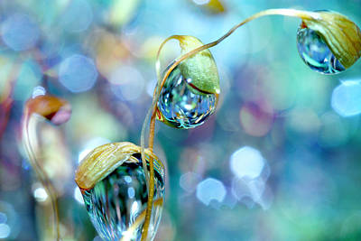 Photograph - Rainbow Moss Drops by Sharon Johnstone