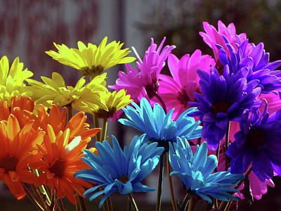 Photograph - Rainbow Mums 5 Of 5 by Tina M Wenger