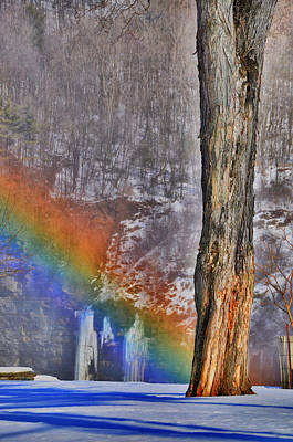 Photograph - Rainbow Oak by Emily Stauring