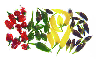Chillie Photograph - Rainbow Of Chillies by Helen Northcott