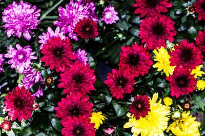Rainbow Of Color Flowers Art Print