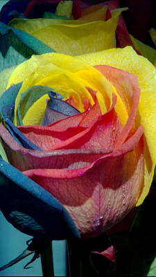 Photograph - Rainbow Of Love 2 by Karen Musick