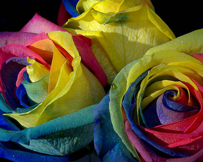 Photograph - Rainbow Of Love 3 by Karen Musick