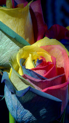 Photograph - Rainbow Of Love by Karen Musick