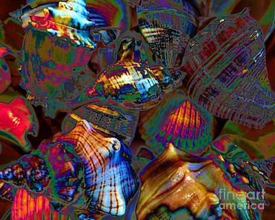 Photograph - Rainbow Of Shells by Barbie Corbett-Newmin