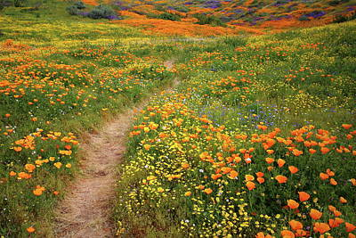 Photograph - Rainbow Of Wildflowers Bloom Near Diamond Lake In California by Jetson Nguyen