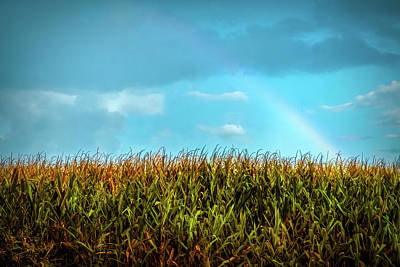 Photograph - Rainbow Over A Corn Field by Lilia D