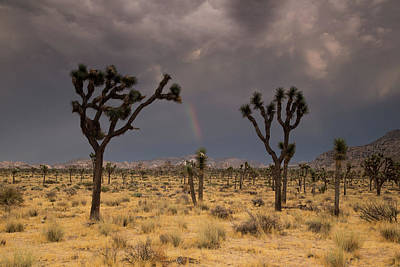 Photograph - Rainbow Over Joshua Trees by Kunal Mehra
