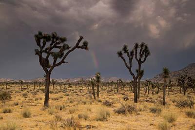 Photograph - Rainbow Over Joshua Trees by Kunal Mehra