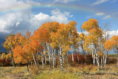 Refracted Light Photograph - Rainbow Over Moose by Kathleen Bishop